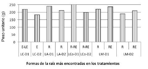 Efecto de sistemas de labranza y densidades de siembra de batata en los pesos unitarios de  raíces tuberosas. Venezuela. 2014.