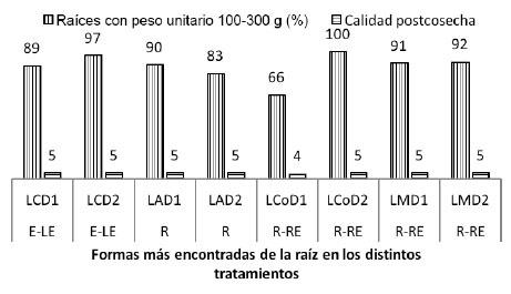Efecto de sistemas de labranza y densidades de siembra de batata sobre el porcentaje de raíces tuberosas con pesos unitarios de preferencia y niveles de calidad postcosecha. Venezuela. 2014.