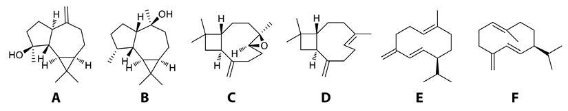 View of Essential oils of Baccharis trinervis (Asteraceae