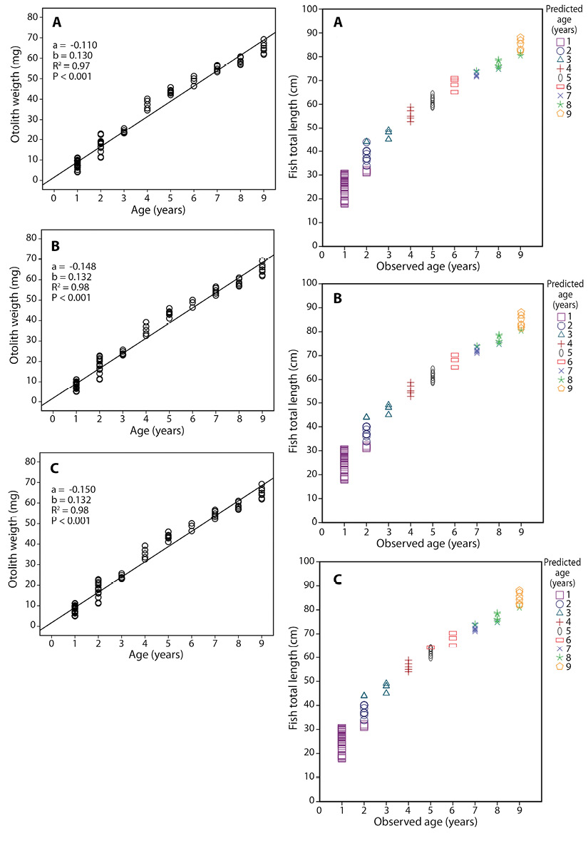 View of Using otolith weight to predict the age of different