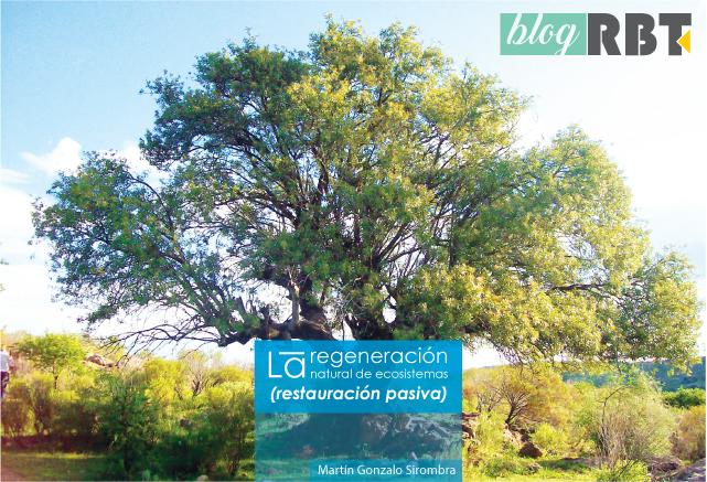 Imagen (encabezado): árbol conocido en la región como Horco Molle. Fotografía de Roberto Fiadone (CC BY-SA 3.0)