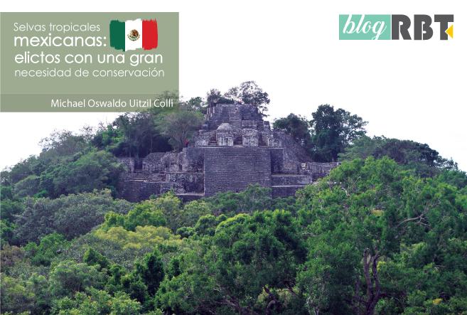 Reserva de la Biosfera de Calakmul, México. Fotografía por Marcos Quiroz