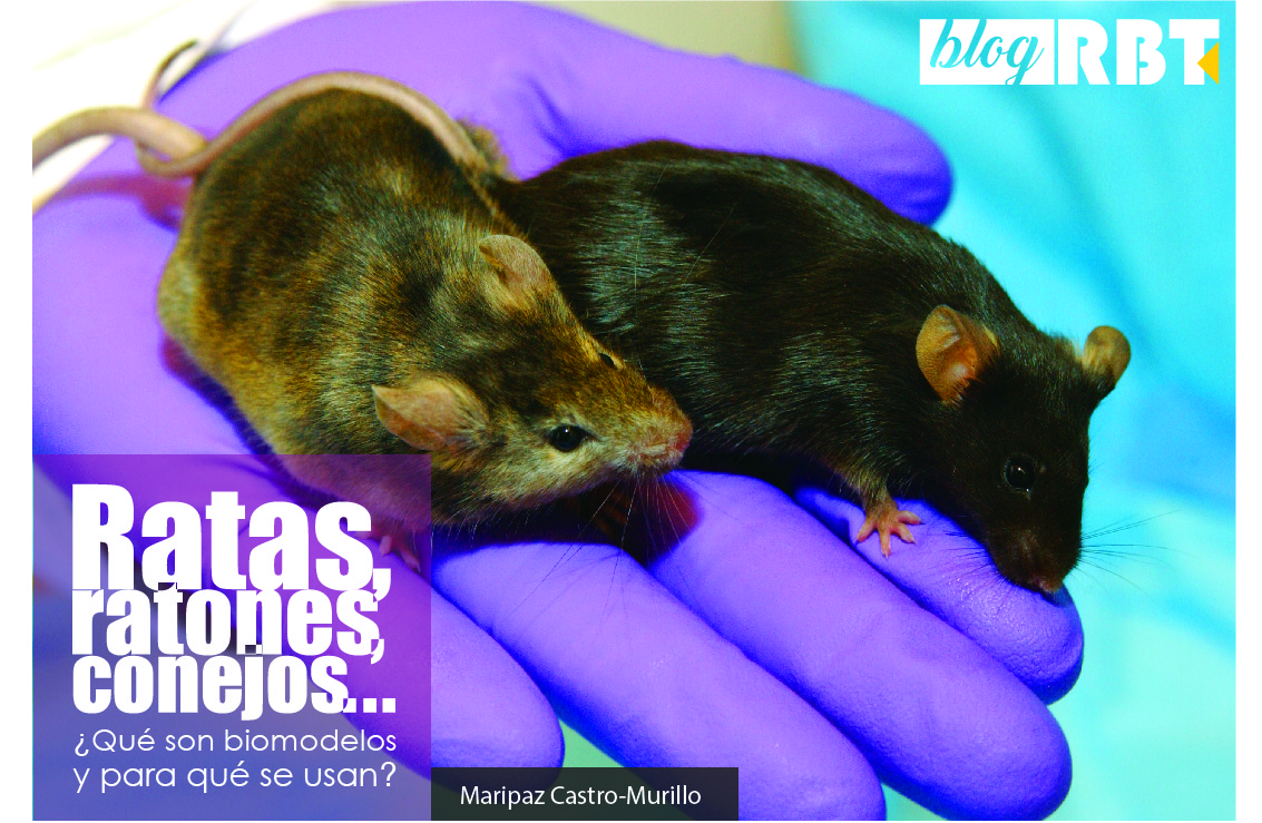 Ratones de laboratorio. Fotografía cortesía de National Human Genome Research Institute (Public Domain)
