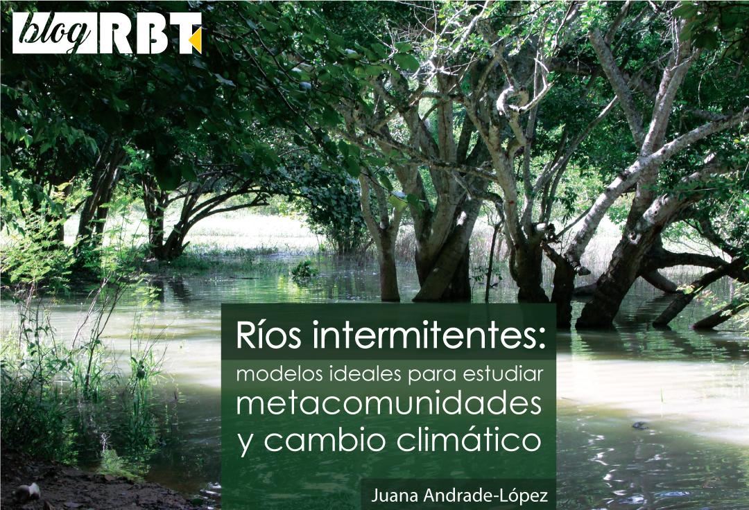 Quebrada intermitente Las Adjuntas (inundada), afluente del Embalse Guanapito, Guárico, Venezuela. Fotografía de Juana Andrade-López