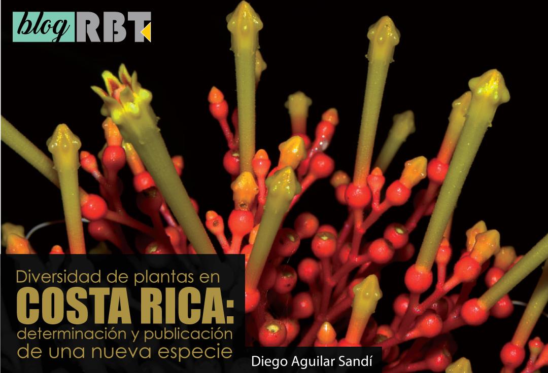 Planta Isertia haenkeana en floración. Fotografía de Reinaldo Aguilar (CC BY-NC-SA 2.0)