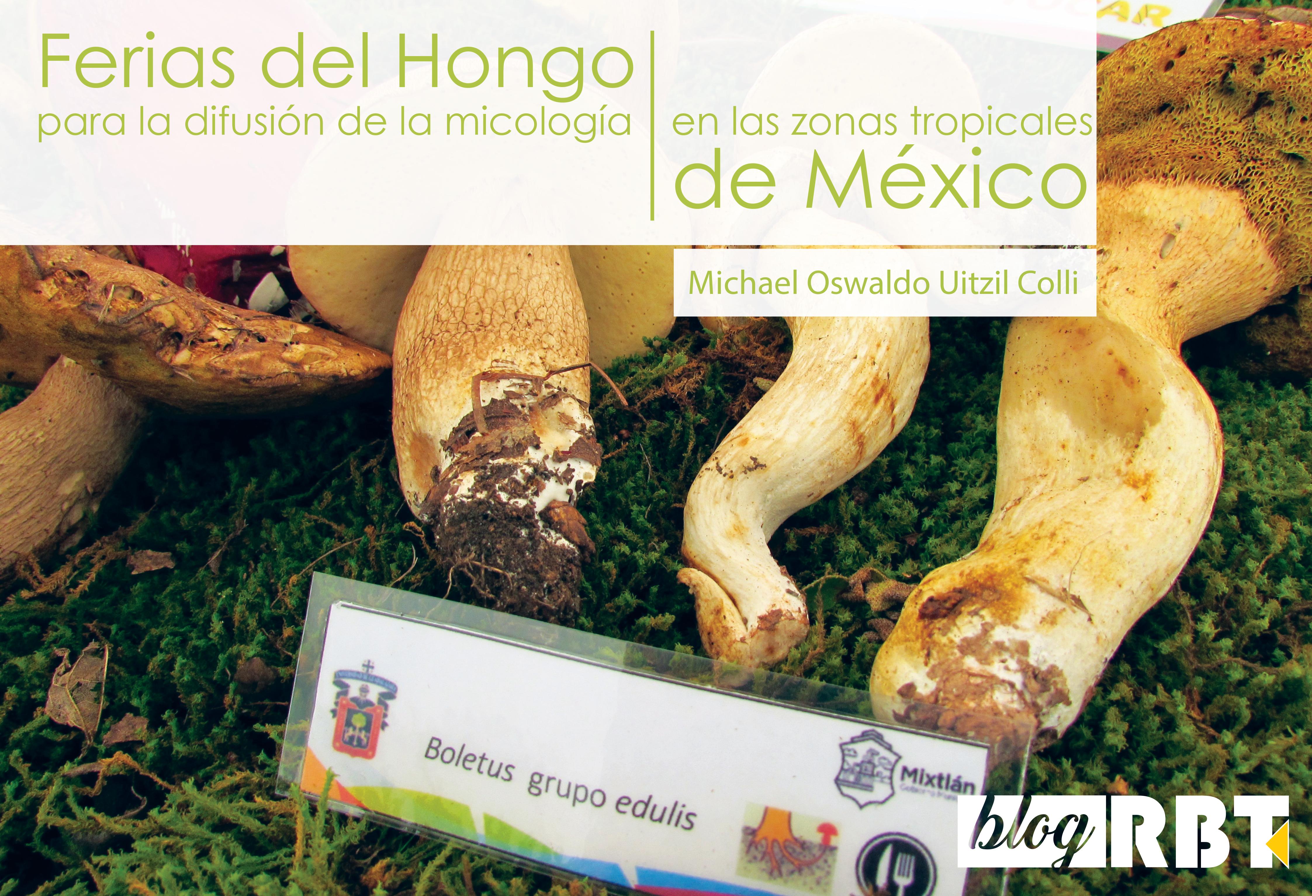 Muestra de hongos del género Boletus durante una exposición de hongos en Mixtlán, Jalisco. Fotografía de Michael Oswaldo Uitzil Colli