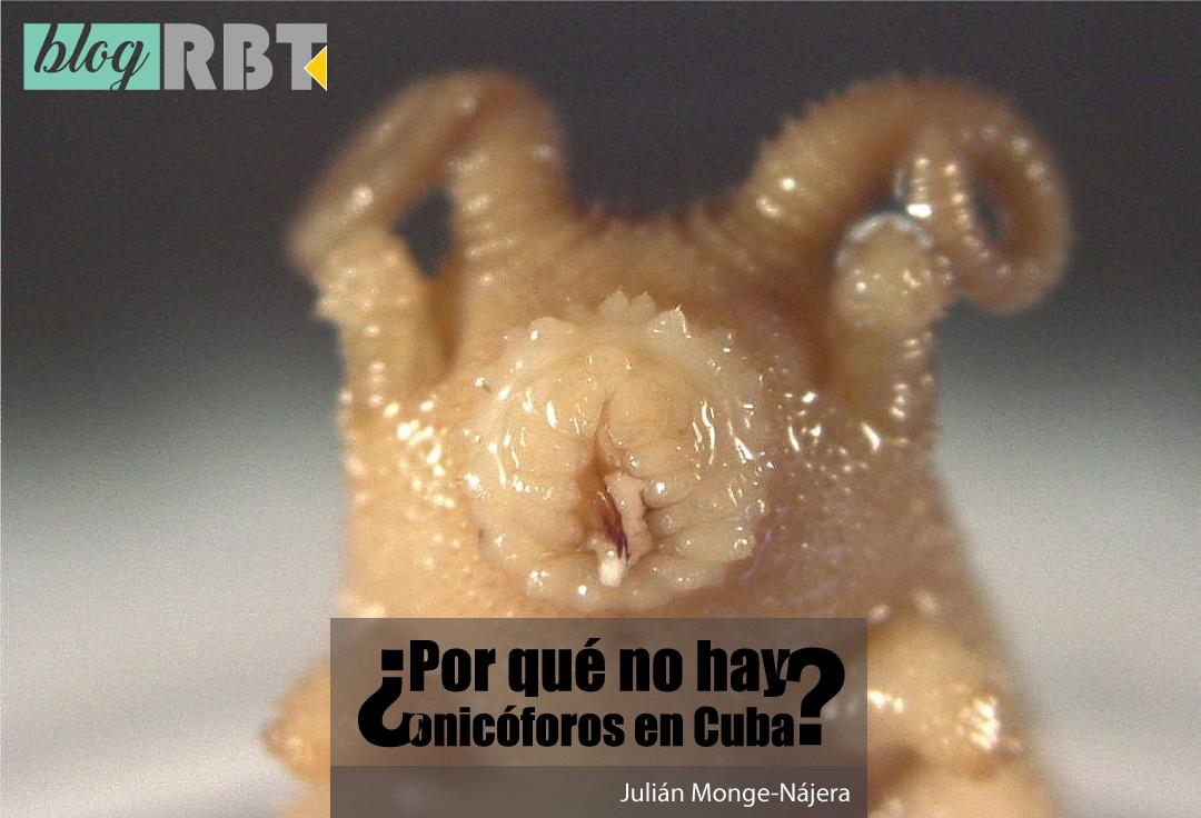 Una especie de onicóforo, aún sin nombrar, de Nicaragua. Fotografía de Julián Monge-Nájera