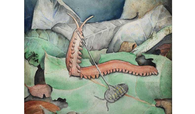 Onychophora Gerardo Avalos