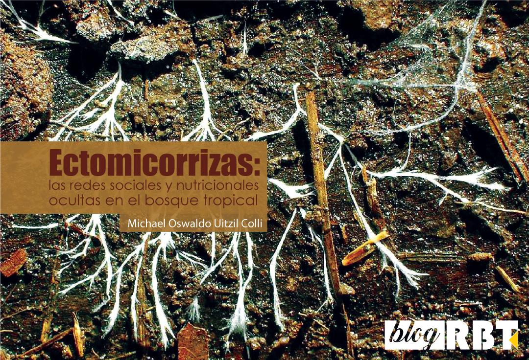 Hifas de hongos. Fotografía de TheAlphaWolf (CC BY-SA 3.0)
