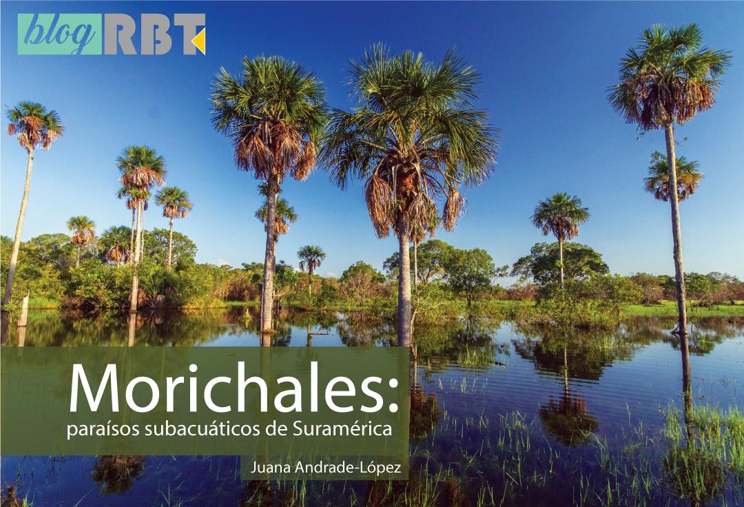 Morichal en Colombia. Fotografía de Juan Pablo Bueno / Shutterstock