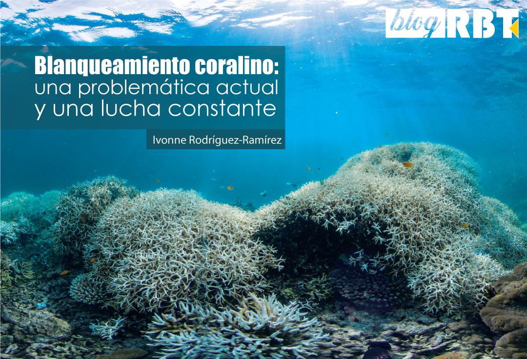 Paisaje submarino que muestra blanqueamiento de coral en Lizard Island, Gran Barrera de Coral, Australia. Crédito: The Ocean Agency / XL Catlin Seaview Survey / Richard Vevers (CC BY 2.0)