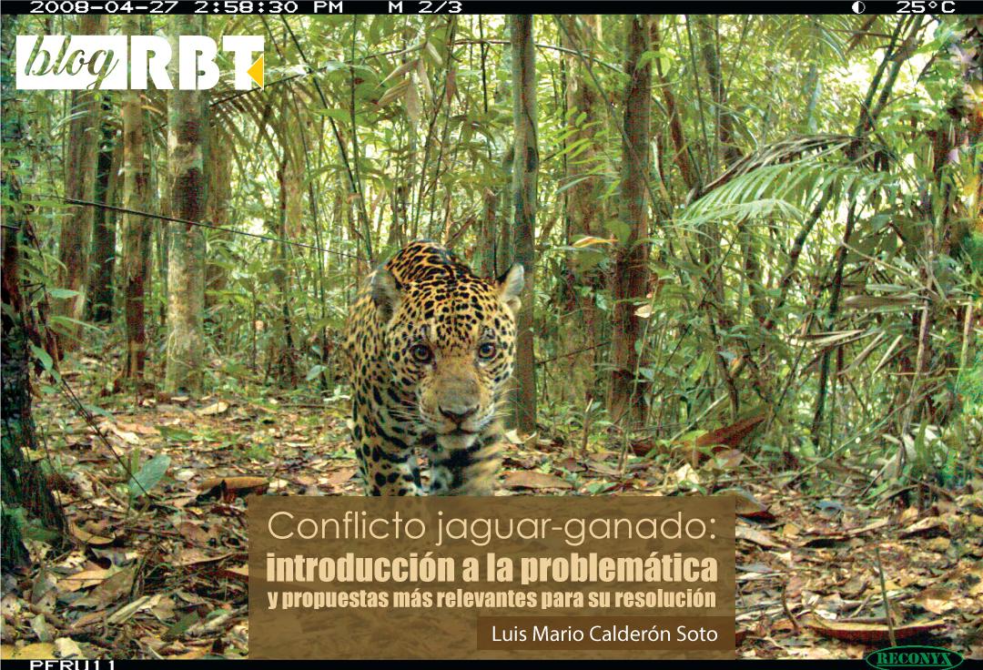Jaguar, Panthera onca, en Perú. Crédito: eMammal (CC BY-NC-SA 2.0)