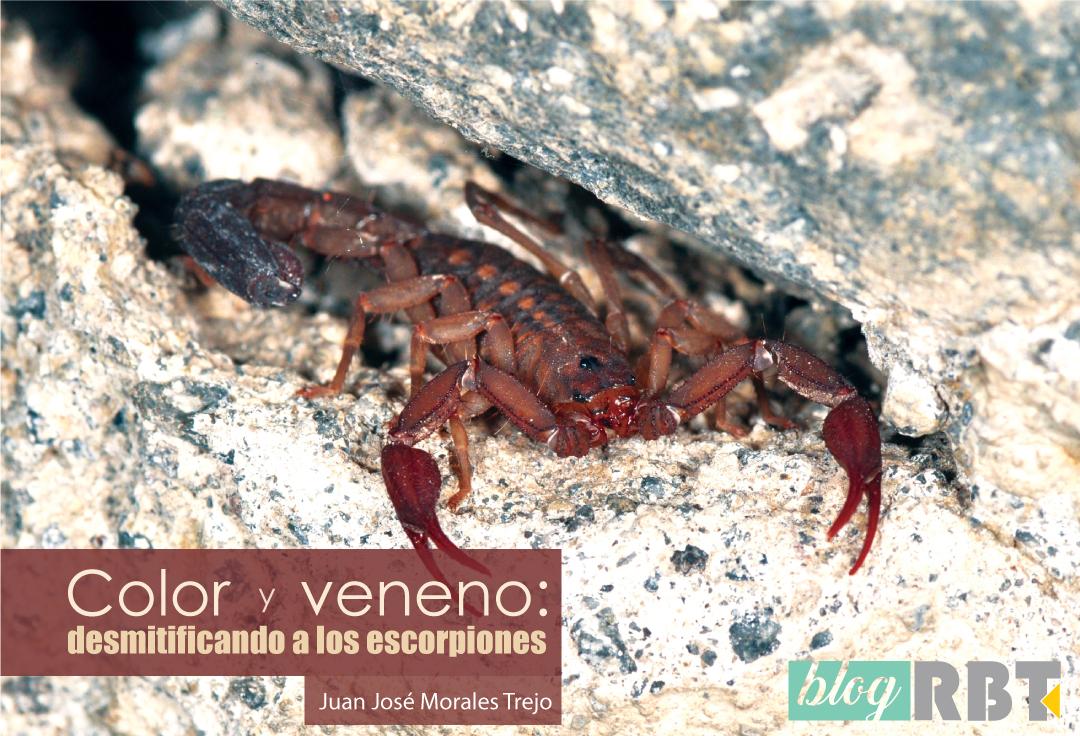 Escorpión dentro de una grieta en Cuernavaca, México. Fotografía de Pavel Kirillov (CC BY-SA 2.0)
