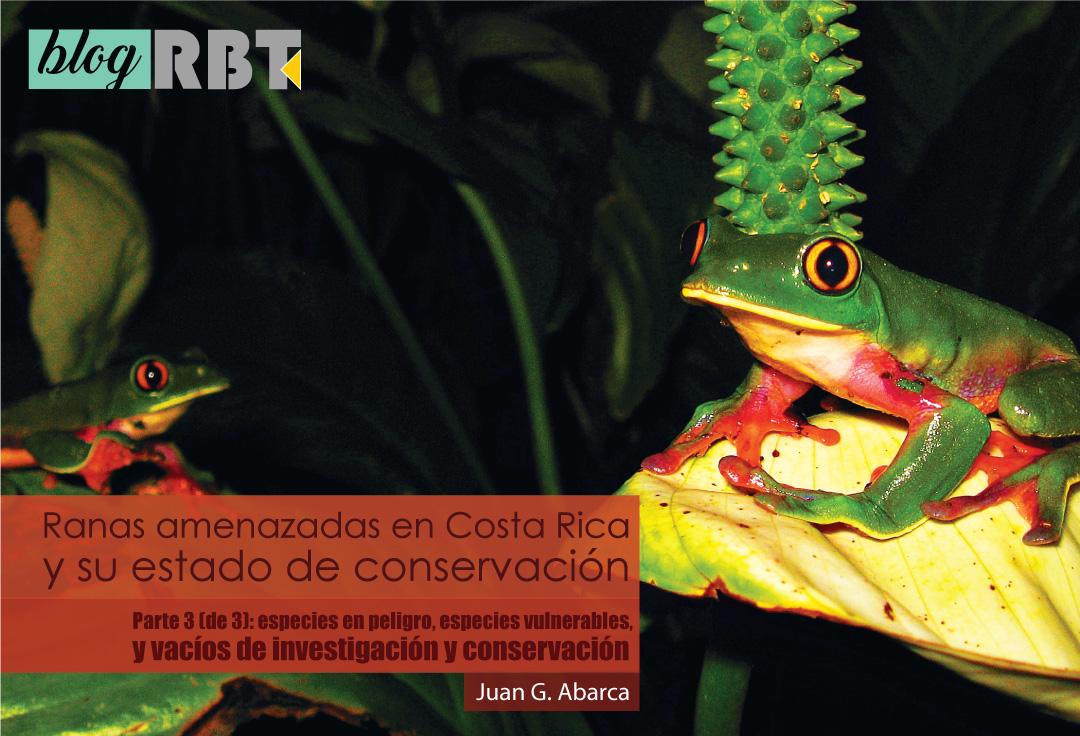 Dos ranas de cafetal Agalychnis annae sobre vegetación. Fotografía de Juan G. Abarca