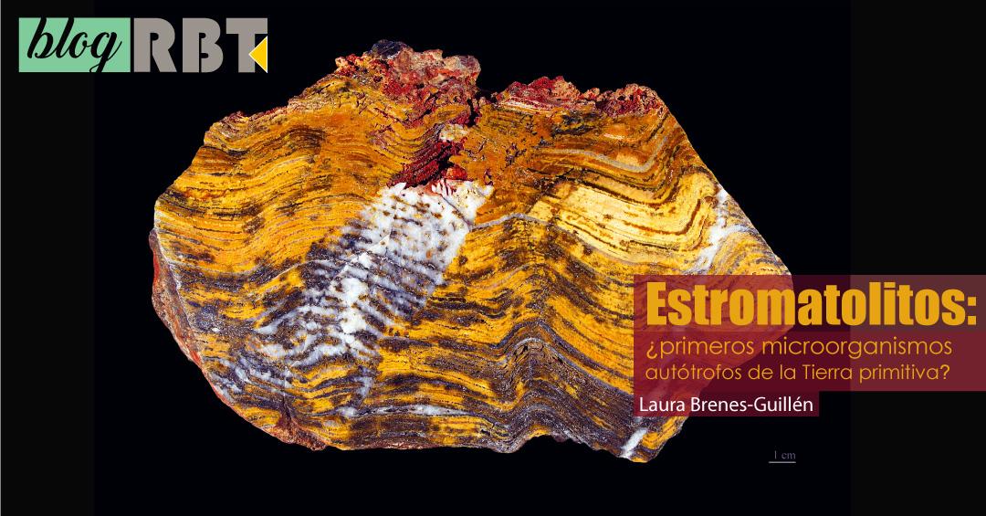 Estromatolito paleoarcaico del oeste de Australia, en el Museo de Toulouse, Francia. Fuente: Didier Descouens (CC BY-SA 4.0) / Cuadros de texto añadidos al original