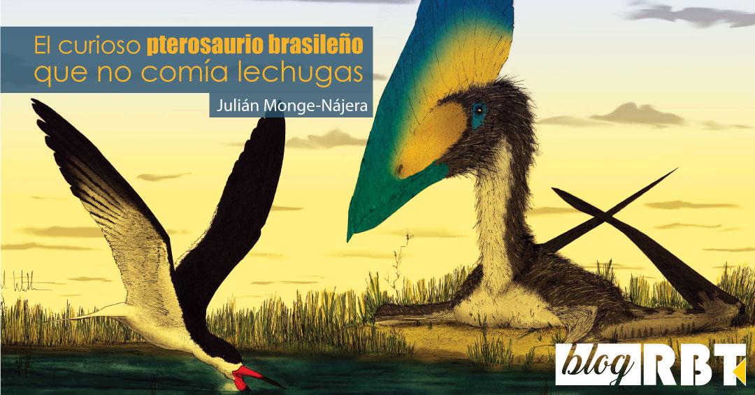 Un pterosaurio Thalassodromeus (derecha) y un rayador Rynchops buscando alimento (izquierda). Fuente: Mark Witton (CC BY 4.0) / Cuadros de texto añadidos [Gross, L. (2007) PLoS Biol 5(8): e217.]