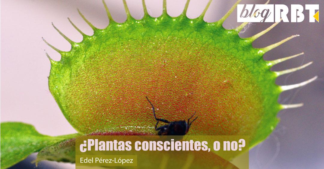 Planta carnívora con insecto capturado. Fuente: Hugo A. Quintero G. (CC BY 2.0)