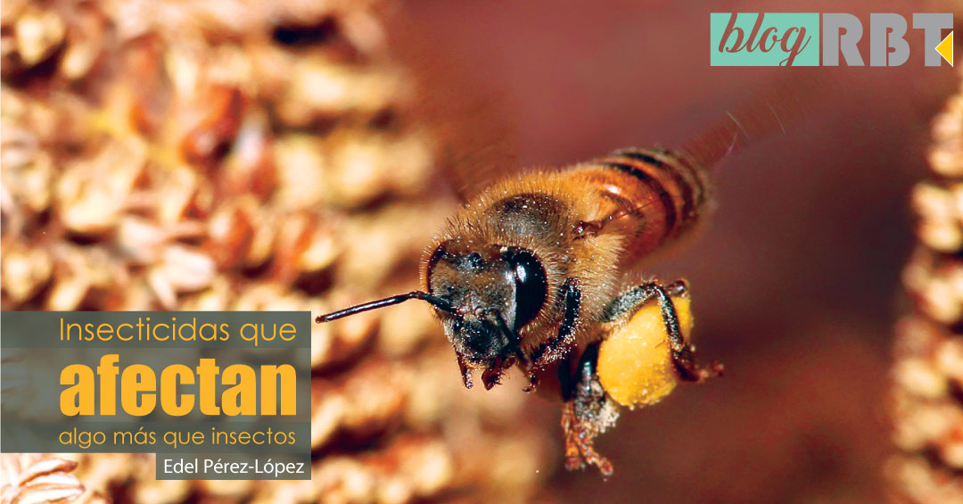 Abeja con polen. Fuente: Muhammad Mahdi Karim (GFDL 1.2)