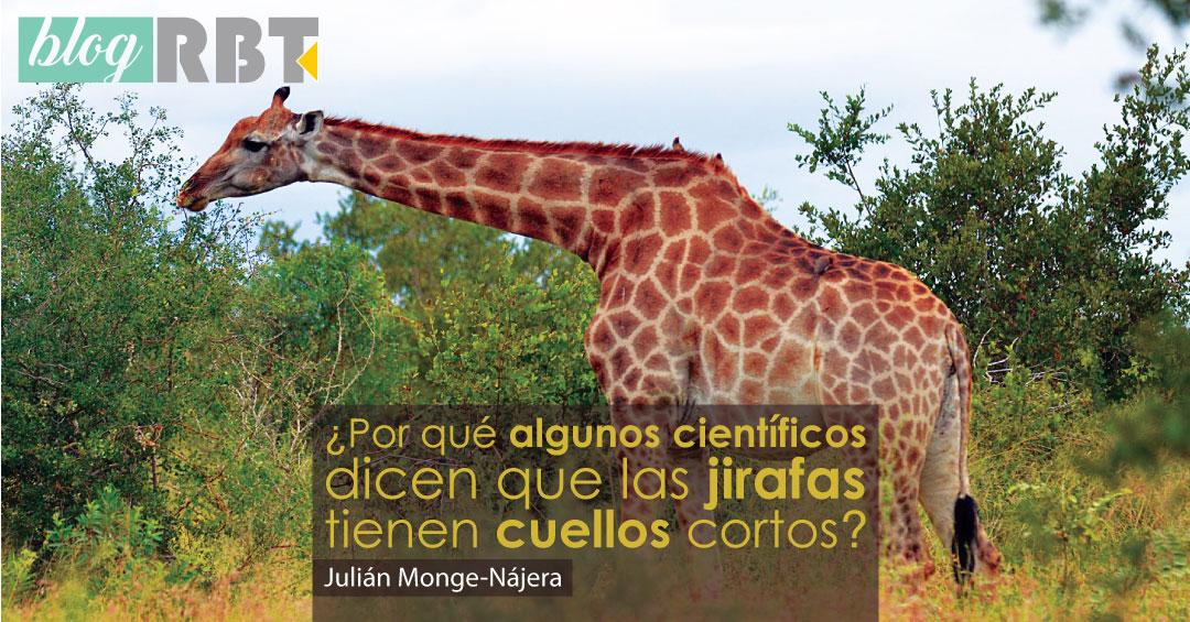 Jirafa en Parque Nacional Kruger, Sudáfrica. Fuente: all-free-photos.com (CC BY-SA 2.5)